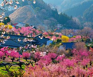 花桃の郷3