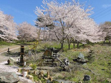 虎山の千本桜